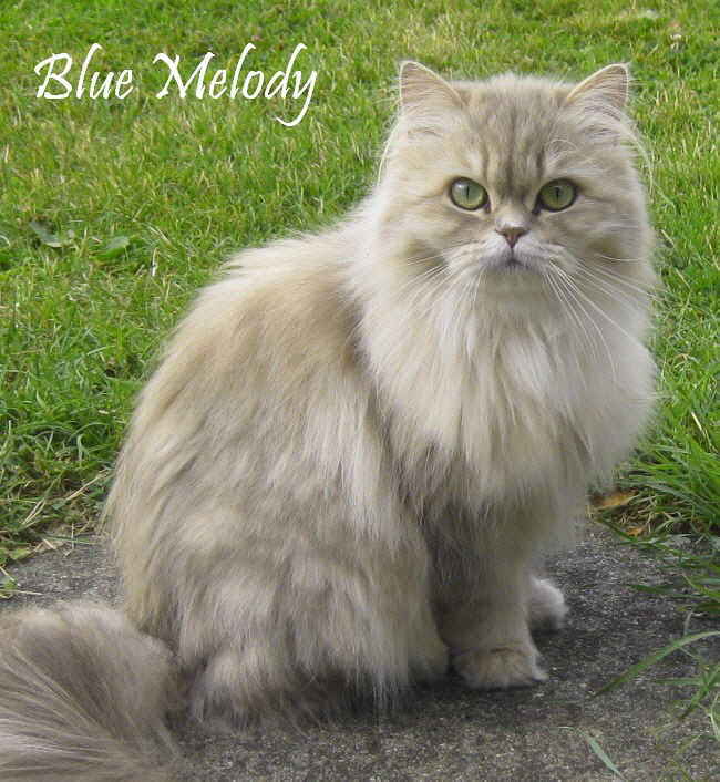 blue_melody_aug